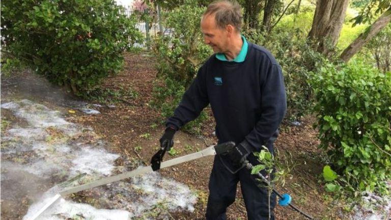 Экологическая альтернатива: как в Уэльсе уничтожают сорняки током и микроволнами