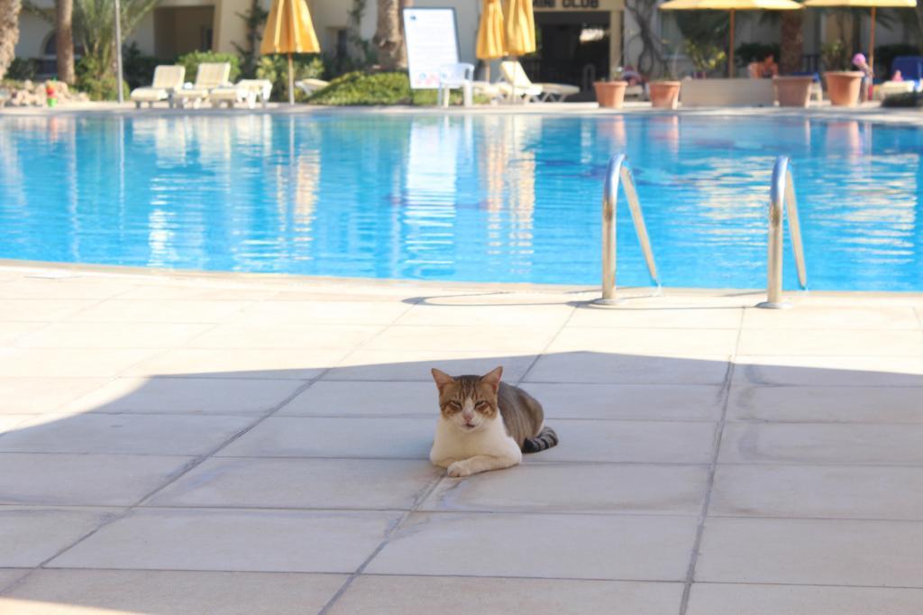 Как кошка руководила верблюдами в Тунисе. Личная история необычного приключения