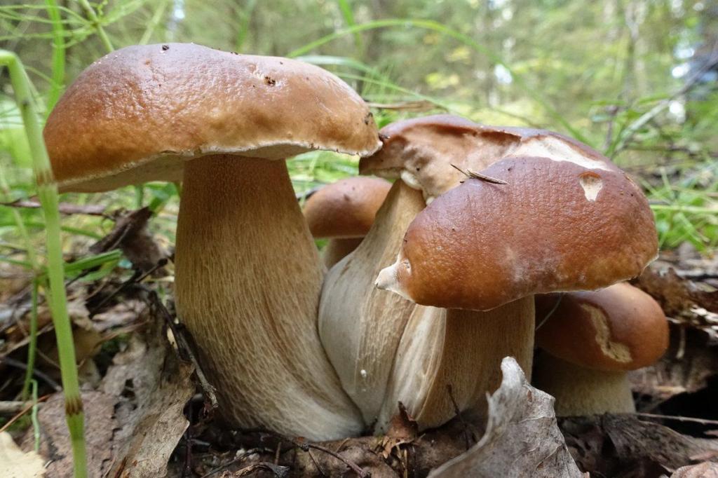 Что появилось раньше: дождь или грибы? Исследование биологов
