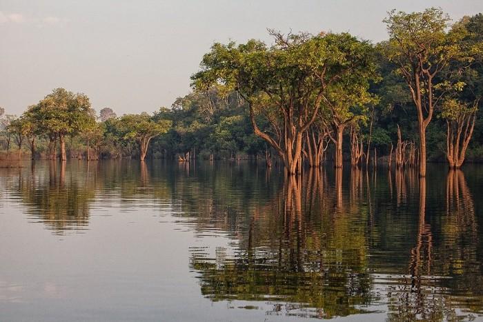 Новые исследования ученых: тропические леса Амазонки не только