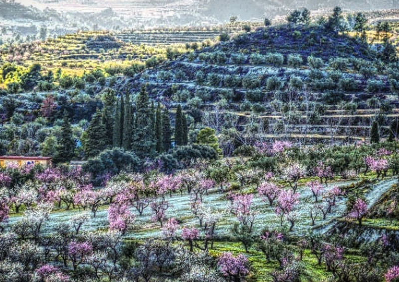 В этом году ранняя весна пришла в Испанию – все цветет и благоухает (фото)