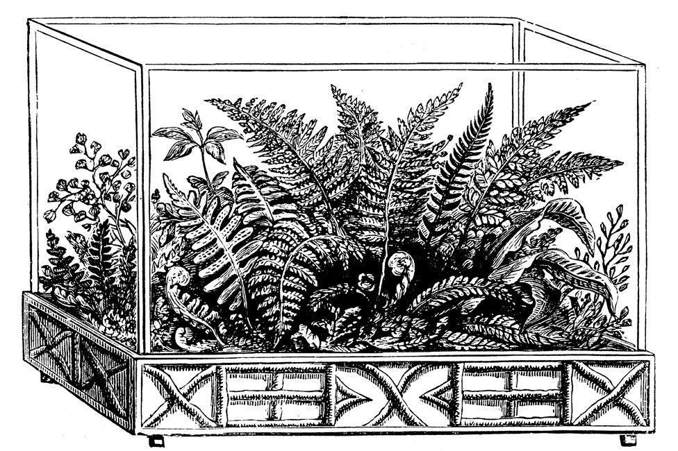 Как простая стеклянная коробка изменила мир: изобретение Уорда спасает растения и по сей день