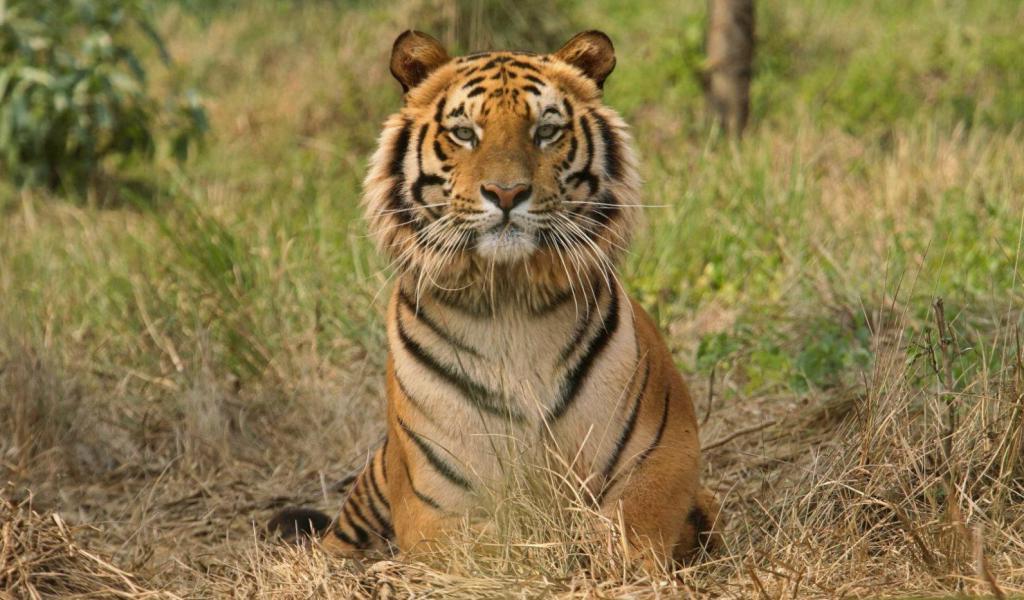 Индийская пара скупает землю возле заповедника с тиграми и ничего с ней не делает: как выглядит настоящая любовь к дикой природе