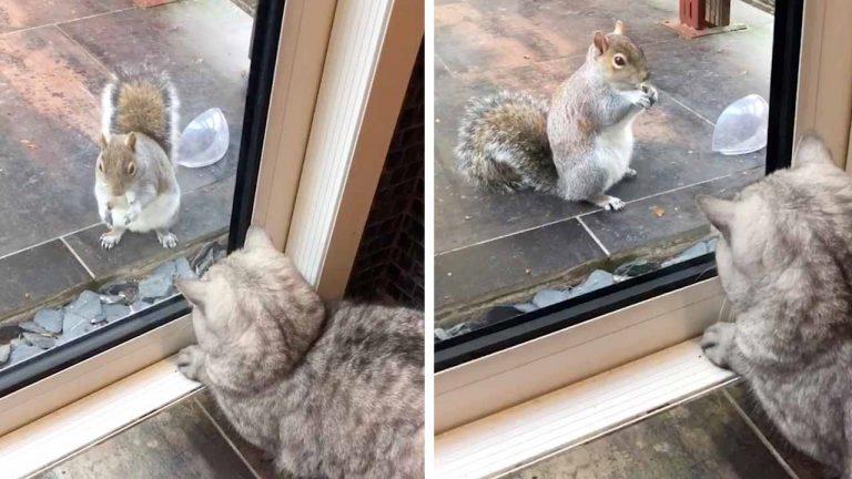 Нахальная белка 3 часа дразнила кошку: она знала, что ей ничего не грозит (видео)