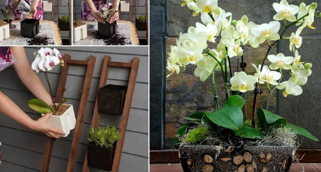 Красиво и по-современному. Подруга-флорист подсказала интересную идею по выращиванию орхидей