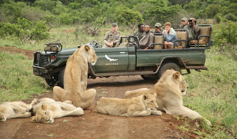 Лучшие места для сафари в Африке в 2020 году: Руанда, Ботсвана и другие направления экотуризма