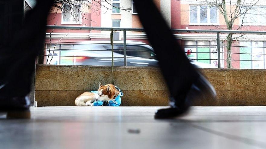 Прохожие, видя эту собаку, думали, что ее бросили. Но, узнав причину, почему она там сидит, были тронуты