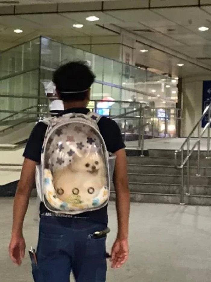 Понедельник перестал быть скучным: улыбающийся шпиц радует пассажиров метро