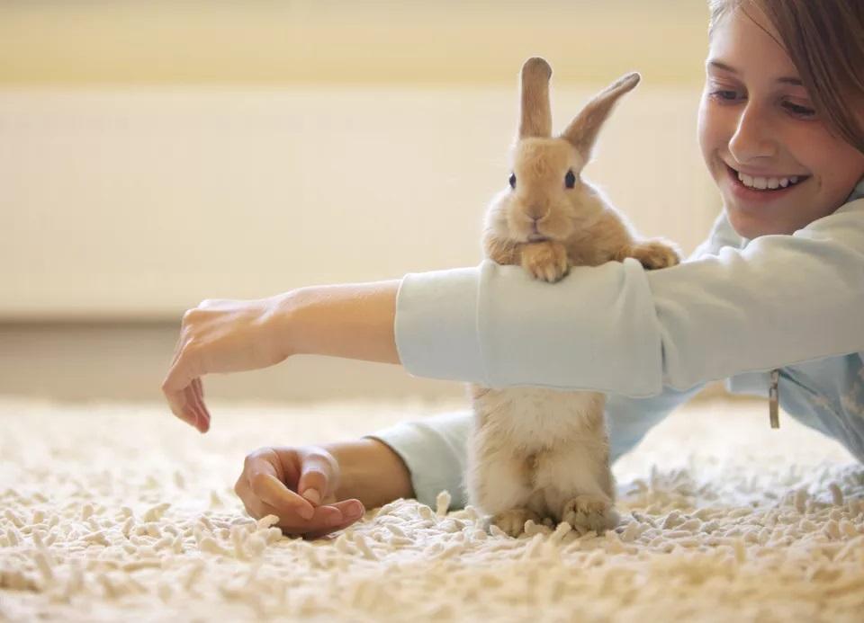 Черепаха, геккон, кролик: какое альтернативное животное купить ребенку, если вы не готовы заводить собаку