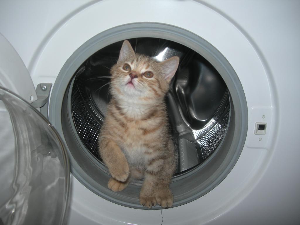 Муж постоянно тащил кота в постель: устала от шерсти на простынях и обратилась за помощью к опытным кошатницам