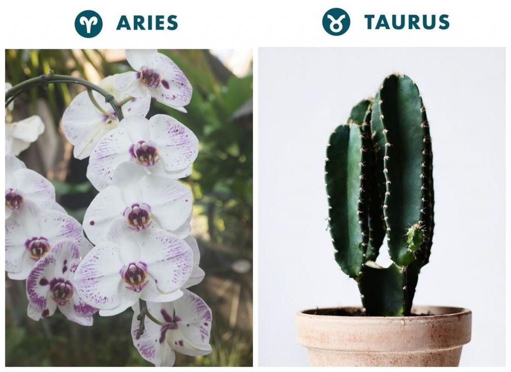 Комнатные растения в дом следует выбирать согласно своему знаку зодиака – тогда и жизнь наладится, и деньги в кошельке будут всегда водиться