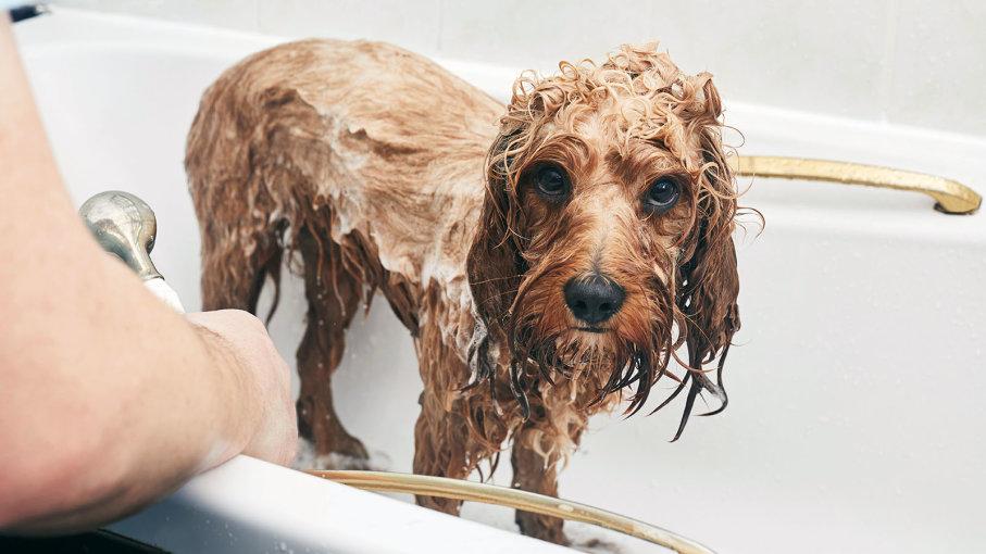 Как часто надо купать свою собаку: ветеринары дали рекомендации