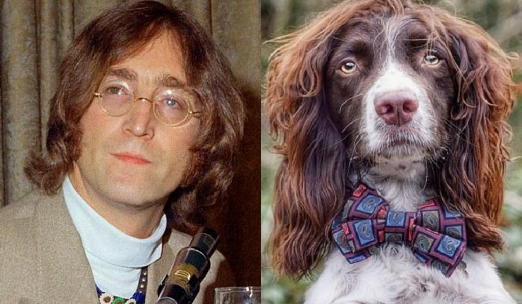 Спрингер-спаниель, похожий на Джона Леннона, стал звездой Instagram: фото