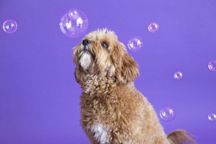Фотограф сняла реакцию собак на мыльные пузыри: они ведут себя просто восхитительно!