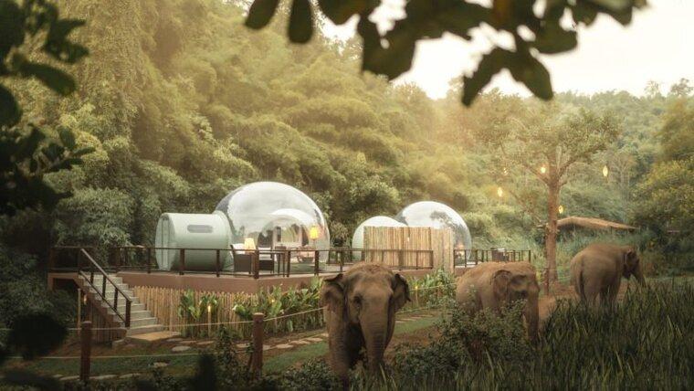 Мелисса остановилась в отеле из прозрачных  пузырей , чтобы понаблюдать за слонами