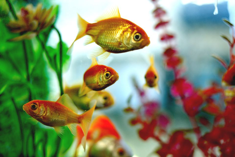 Аквариумные рыбки картинки на телефон отлавливают природных