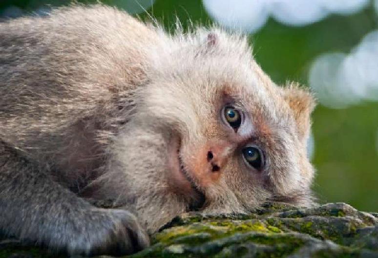 Самое время отвлечься от мировых проблем: новые фото улыбающихся животных