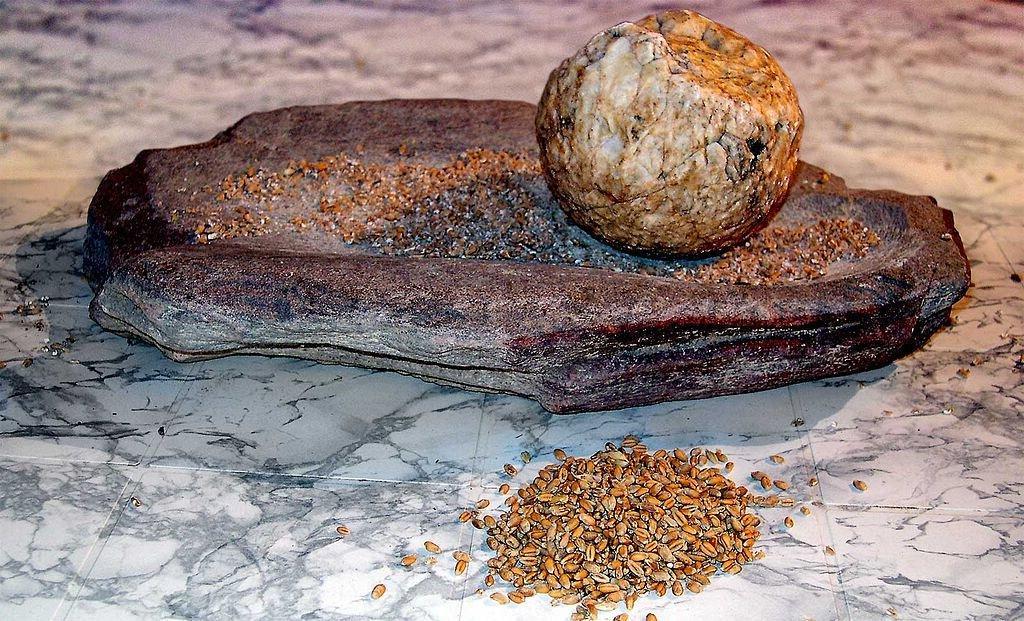 Ученые выяснили, как люди в каменном веке открыли глюкозу в растениях
