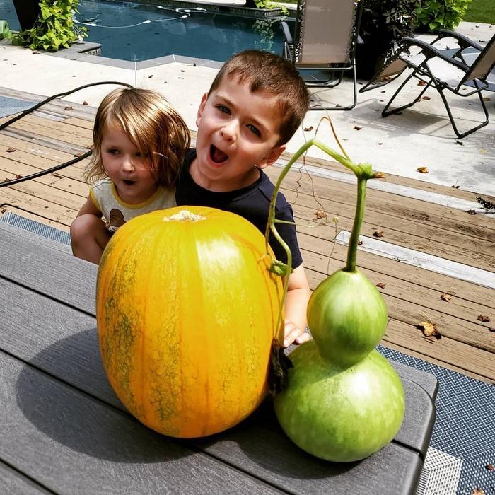 Неприхотливые и вкусные овощи для детского огородика: тыквы, помидоры и не только