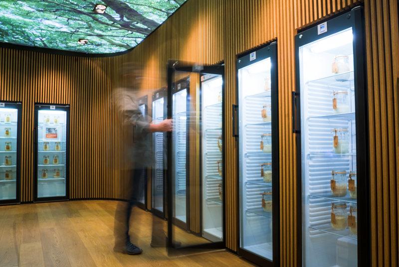 Экспонаты на полках нужно кормить раз в несколько месяцев: чем может удивить посетителя единственная в мире библиотека заквасок