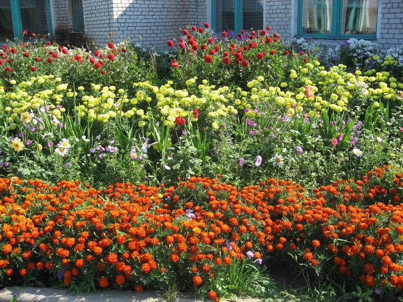 Розы и гвоздики будут плохими соседями. Какие цветы нельзя высаживать рядом, а какие можно?