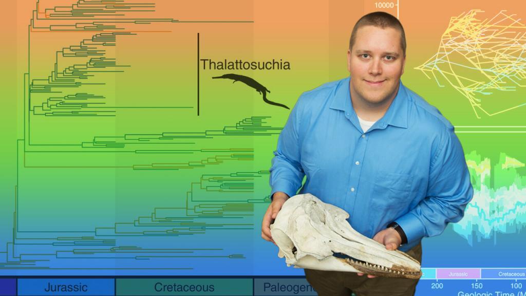 Крокодилы увеличивались в размере в ходе эволюции, чтобы не замерзнуть: исследование
