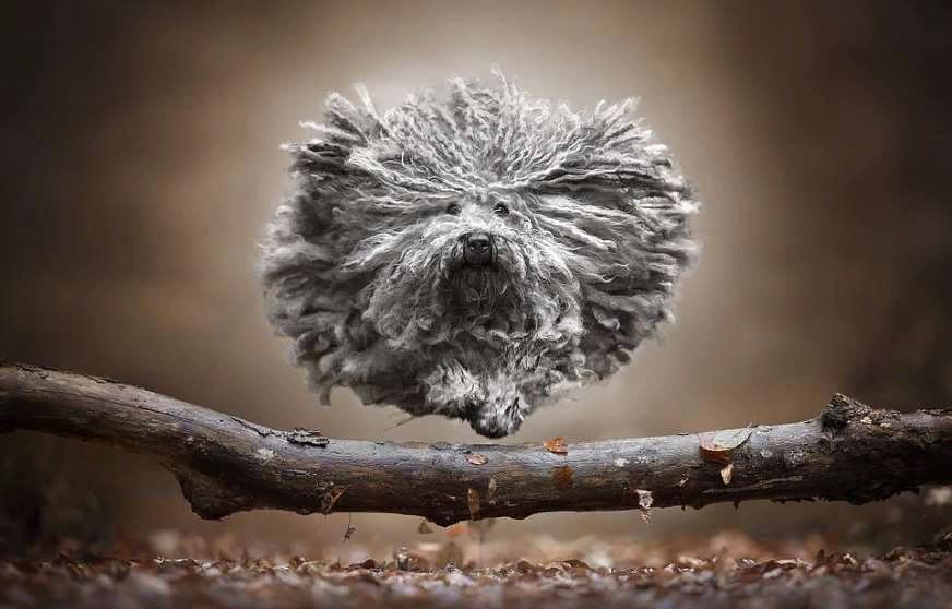 «Собачий экшн»: фотограф показал, как он пытается поймать душу летящей собаки через ее глаза