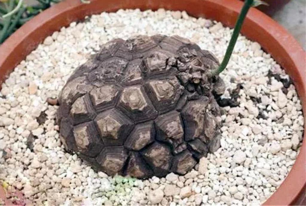 Мужчина посадил необычное растение, а соседи подумали, что закопал черепаху