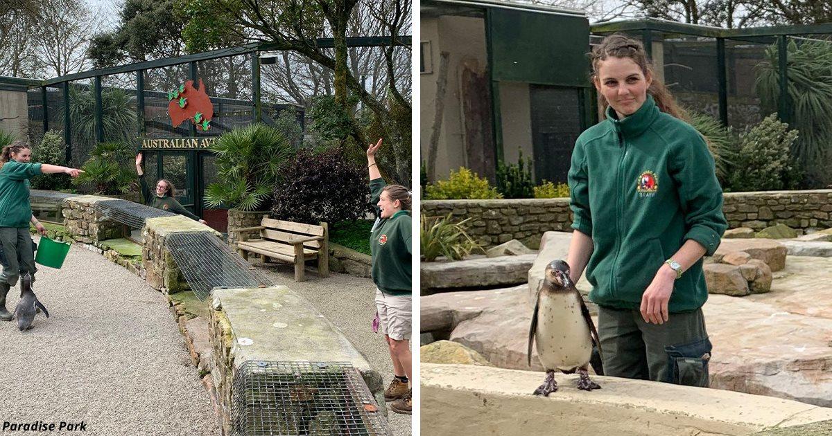 Работники зоопарка изолировались, чтобы ухаживать за животными