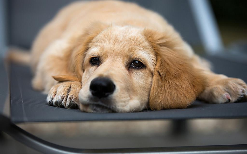 Я продала последнего щенка из помета за 100 рублей, а через 3 месяца покупатель вернулся и доплатил мне еще 5 тысяч