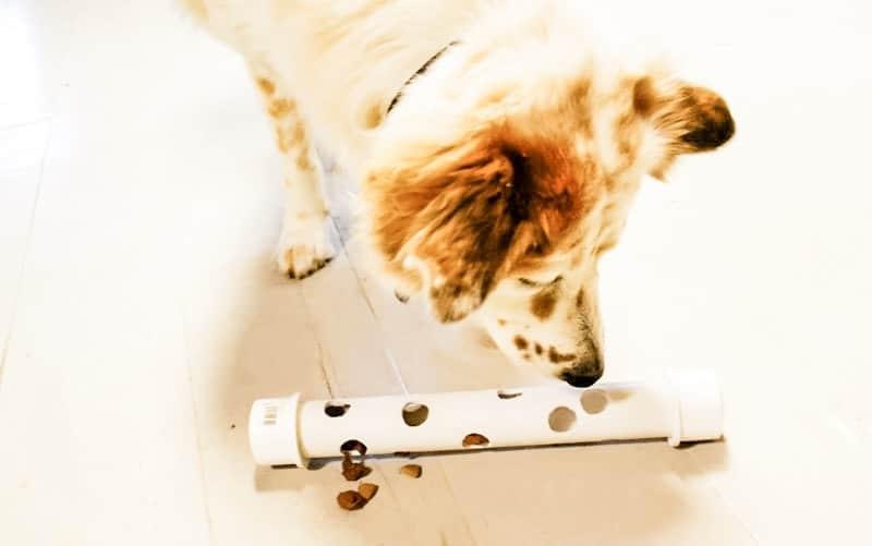 После установки сантехники осталась ненужная пластиковая труба: сделала из нее игрушку для своей собаки