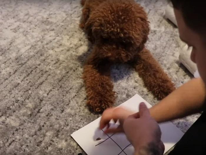 Хозяин решил сыграть со своим псом в крестики нолики: поражения он не ожидал (видео)