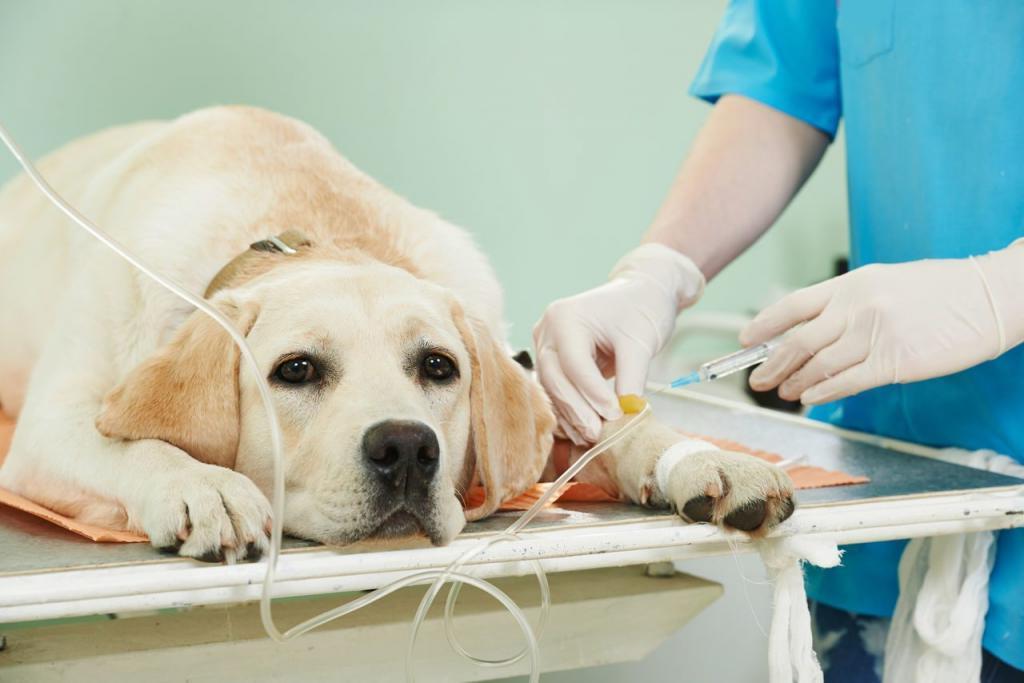 Знакомый ветеринар подсказал одну хитрость, которая позволяет сэкономить на лечении собак. Теперь я обращаю внимание не только на родословную, но и на зубы