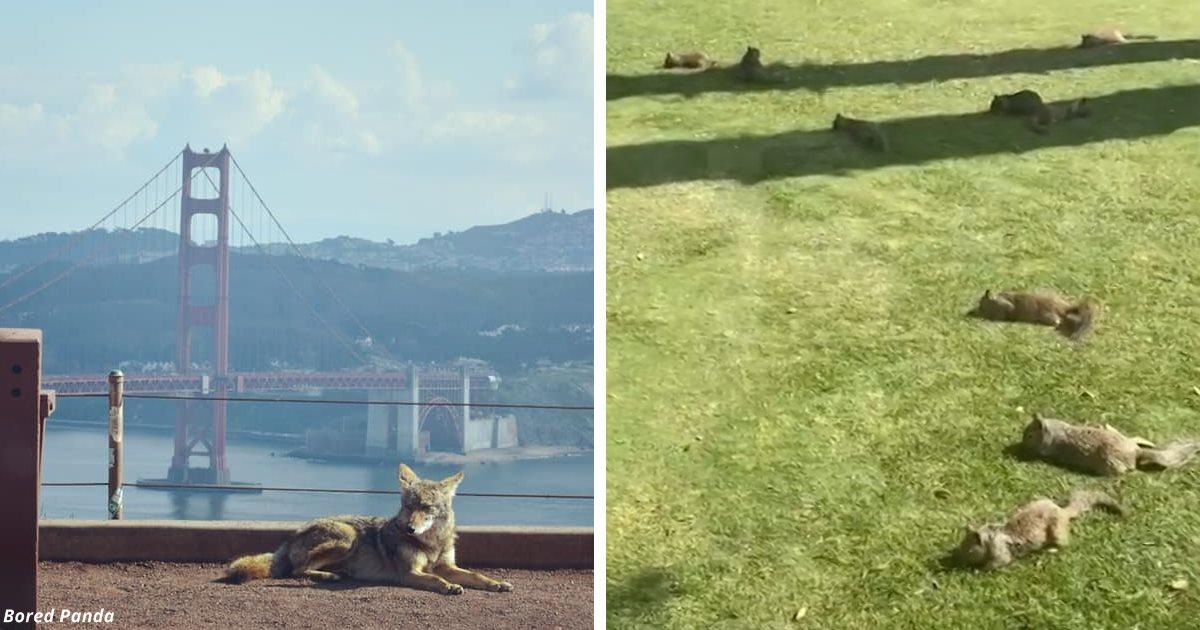 16 фото о том, как животные захватят наши города к концу карантина