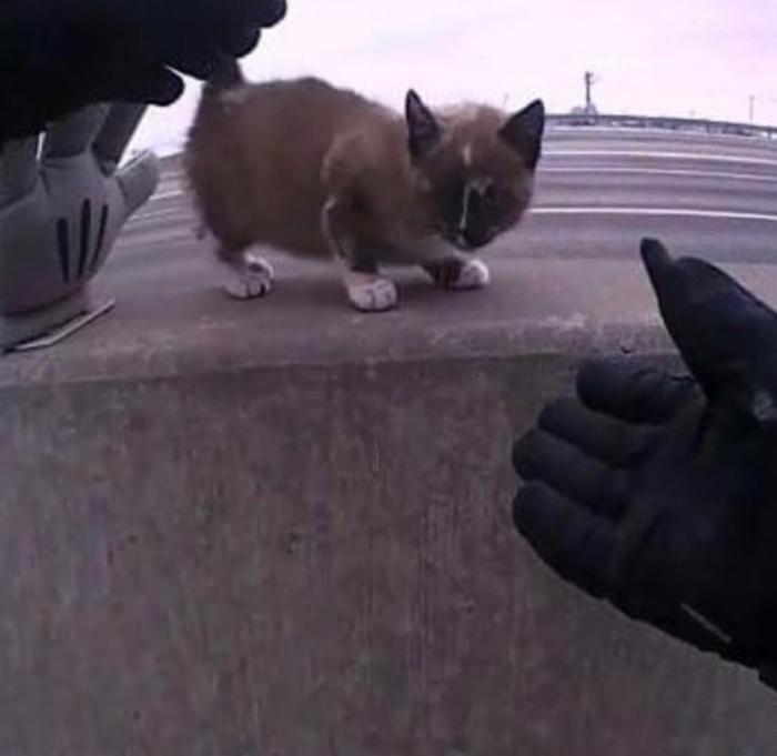 Полицейский спасает маленького котенка на шоссе: теперь у офицера новый друг