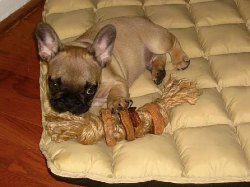 Бюджетная игрушка для собак, которая отлично укрепит зубки питомца: сделала ее из картофеля и веревки