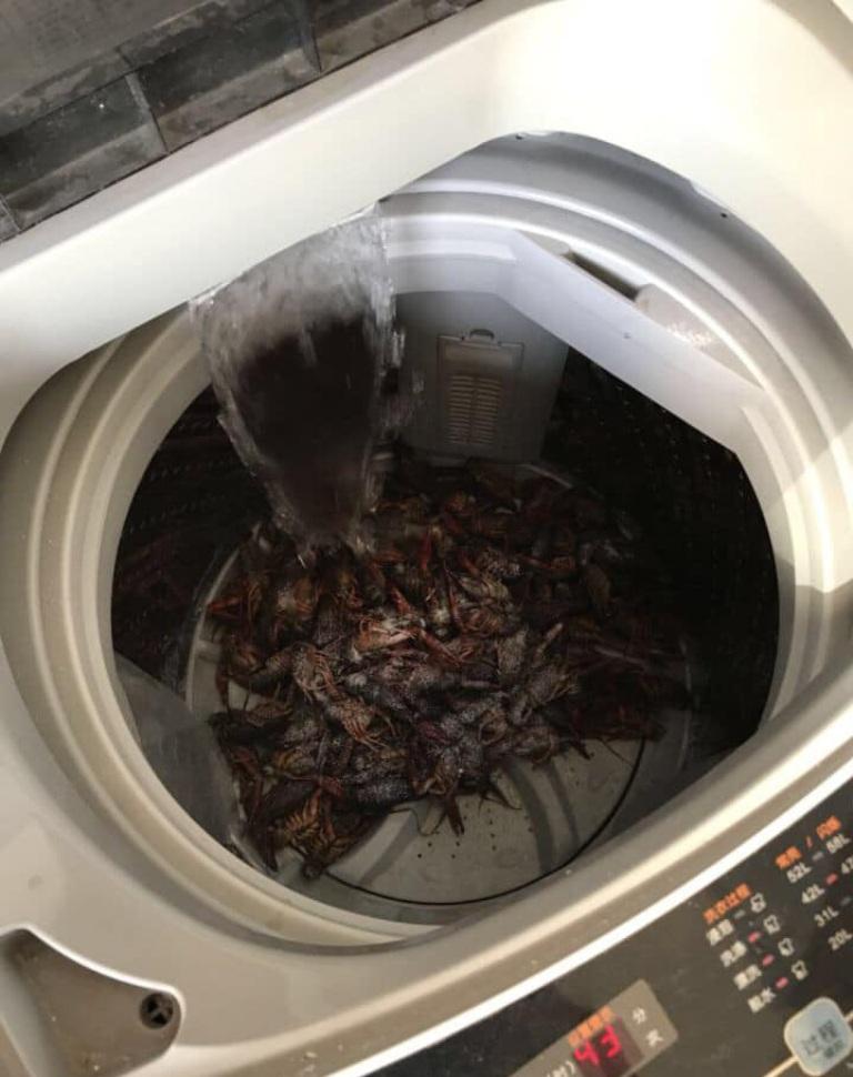 Зато не руками: семейная пара почистила креветки в стиральной машинке