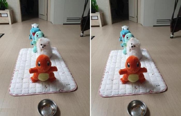 За мной просили не занимать: щенка усадили в очередь за едой вместе с мягкими игрушками и сфотографировали