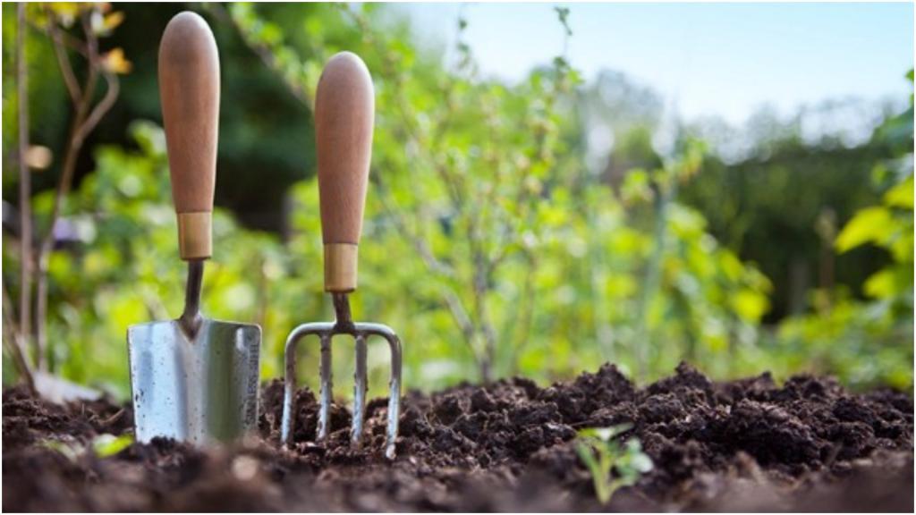 Энотера, книфофия и лихнис: три растения, которые не оставят равнодушным ни одного садовода-любителя