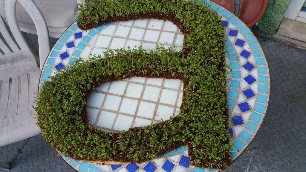 Сделали в саду красивую монограмму с живой зеленью: способ позволит сделать декоративную фигуру любой формы