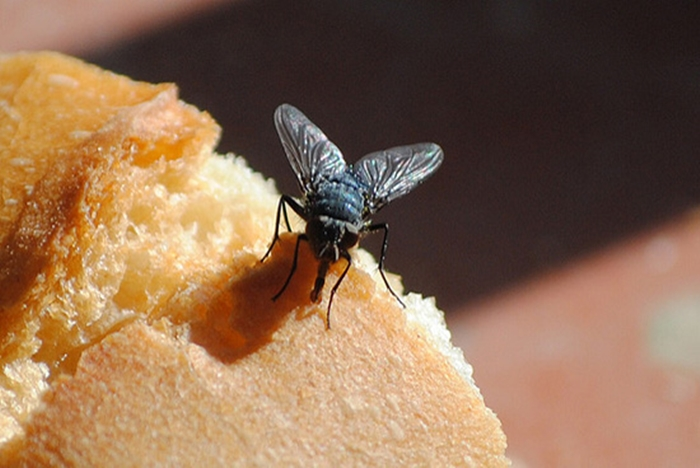 Женщина поделилась простым способом избавиться от мух: нужен пакет с водой
