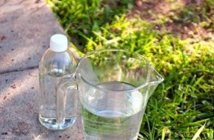 Уксус, горчица и вода от колорадского жука. Как использовать уксус на огороде