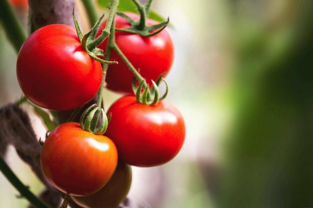 Зола для картошки. Подкормка овощей в июне в период цветения