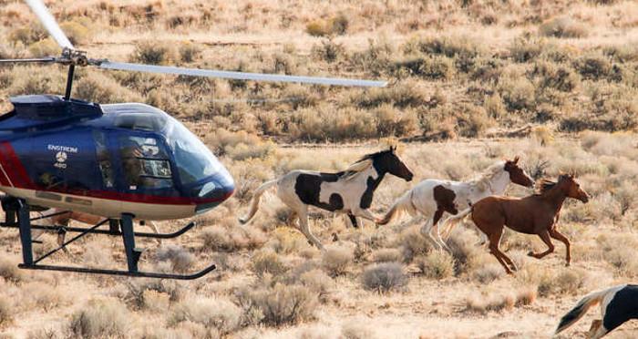Необычная лошадь: биологи сделали с вертолета фото мустанга с рисунком в виде мустанга