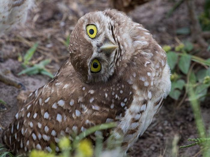 Они такие милые: художница делает фотографии птиц, и ищет для этого идеальные моменты