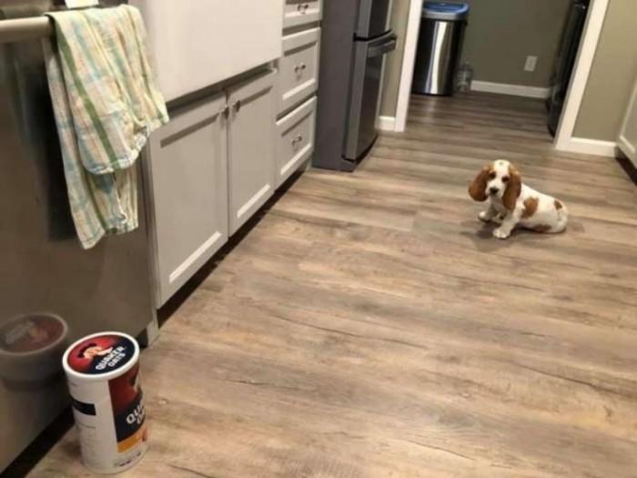 Хозяин дал своему щенку поиграть банку с овсянкой: такой реакции питомца он не ждал