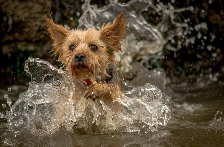 Совсем не безобидное увлечение для собак   купаться в водоеме: почему надо всегда иметь при себе полотенце
