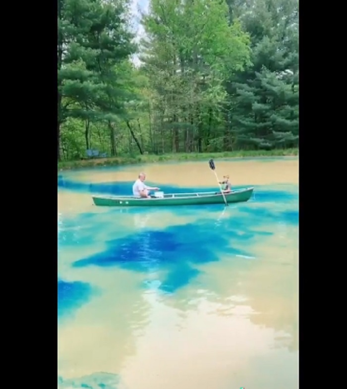 Семья решила покрасить воду в своем пруду: преобразование водоема понравилось подписчикам