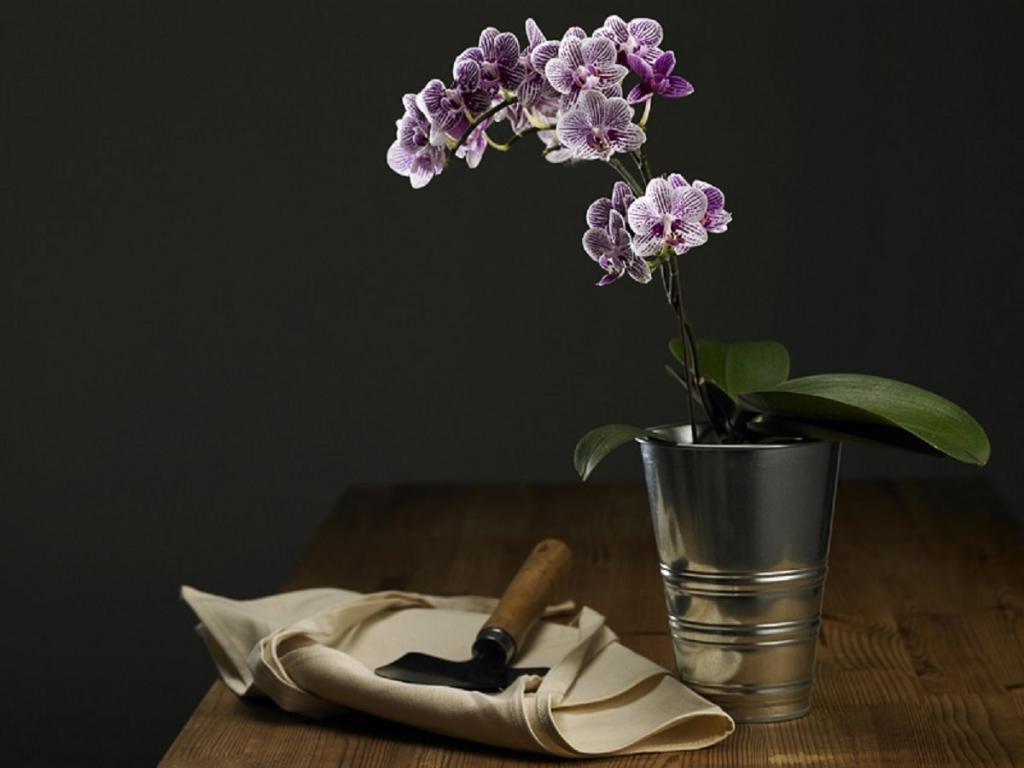 Знакомая разводит орхидеи. Она рассказала, как из одного растения получить два