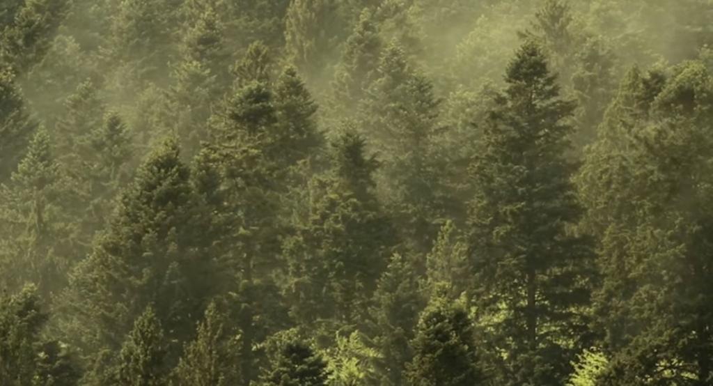 Явление, которое происходит только один день в году, было снято на камеру в национальном парке в Румынии